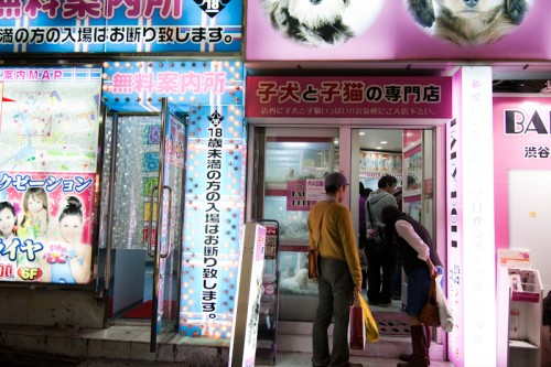 "Passerbys look at animals at an illuminated pet shop next to a ""free information center"" on Dogenzaka."