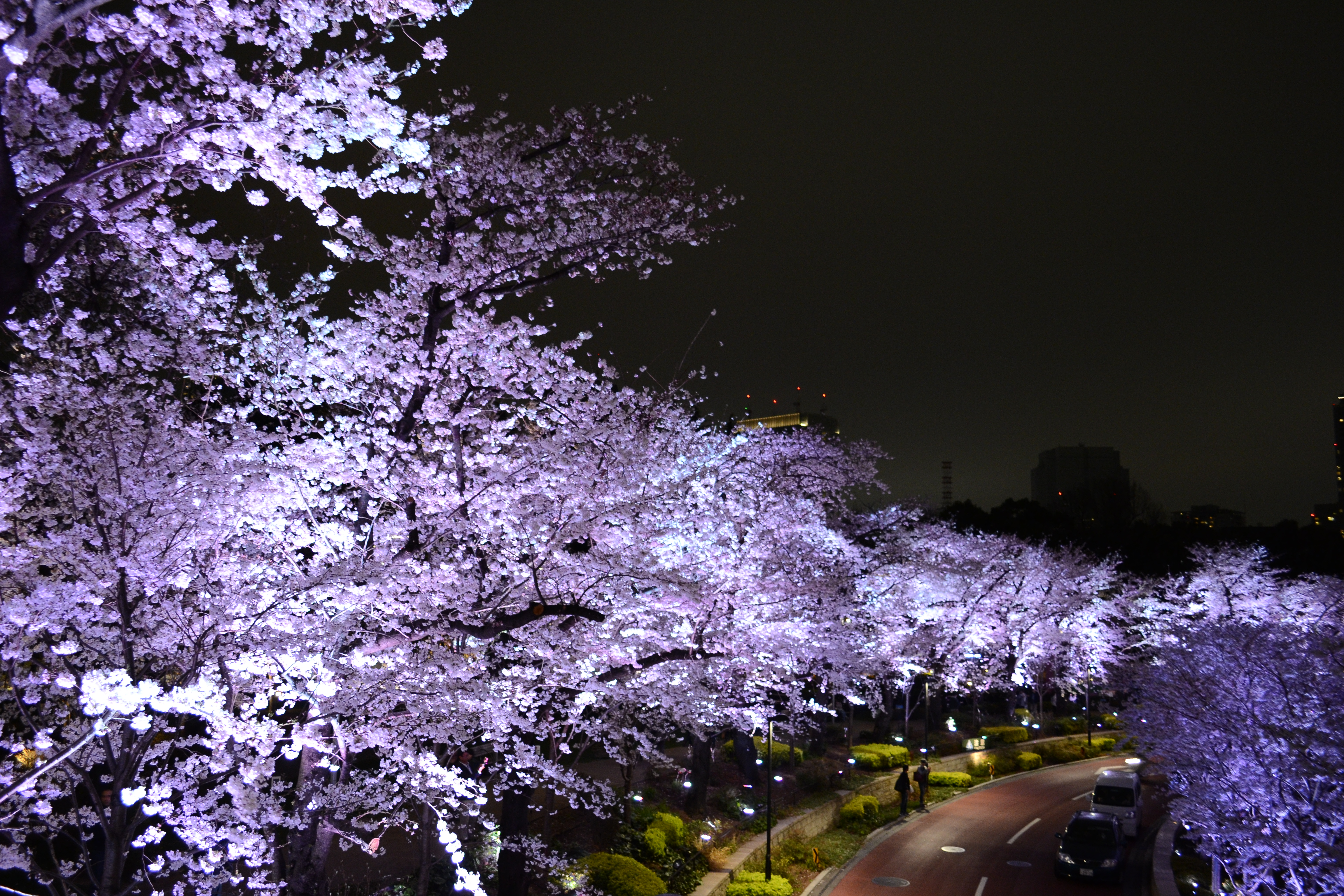 Cherry Blossom Sale In Tokyo Last Chance To Ȋ�見! Japan Subculture Research Center