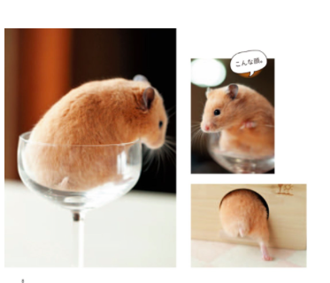 These hamsters aren's so cute when they're eating their children or the female kills and devours her mate.